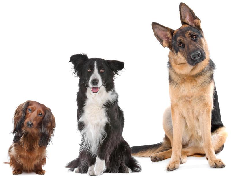 Small Medium Large Dogs